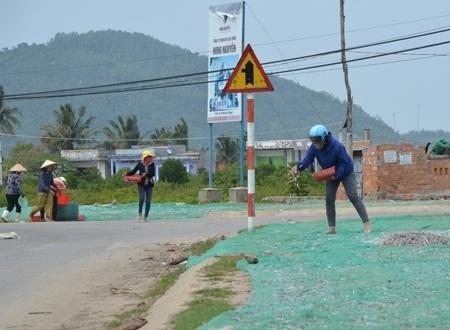 Bội thu cá cơm, người dân phơi cá cơm kín các con đường ở Sa Huỳnh.