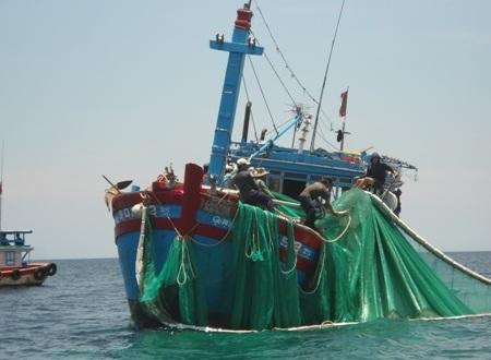 Loại tàu cá dùng lưới cào đang tận diệt nguồn hải sản ven bờ biển Lý Sơn.