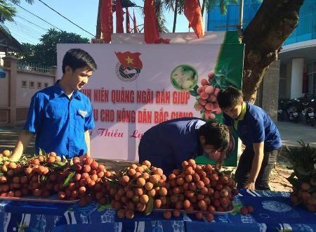 Thanh niên Quảng Ngãi sẵn sàng hỗ trợ vải giúp nông dân Bắc Giang.