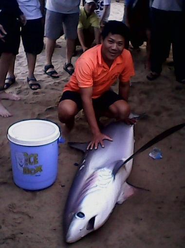 Con cá mập dạt vào bãi tắm Nha Trang chiều tối 26/12.