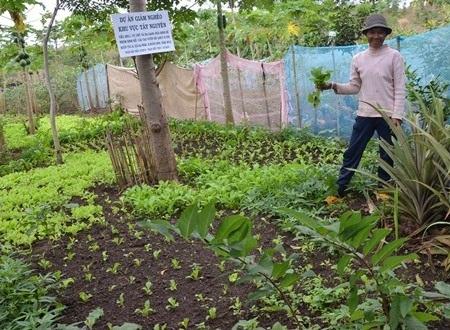 Vườn rau dự án phát triển xanh mượt với nhiều loại rau, quả giúp cải thiện đời sống người nghèo