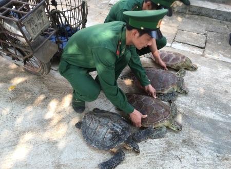4 cá thể rùa được trả về vùng biển tự nhiên.