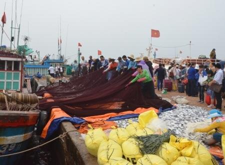 Hình ảnh nhộn nhịp khi ngư dân dũ cá mắc lưới xuống những tấm bạc được trải dài trên cảng Lý Sơn.