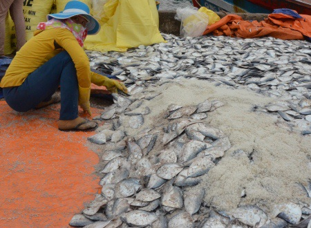 Sau thời gian dài biển động, ngư dân Lý Sơn trúng đậm sản vật của đại dương.