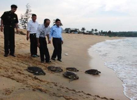 Trả tự do cho các cá thể rùa nhằm bảo tồn chủng loại có nguy cơ dần bị xóa sổ ở vùng biển.