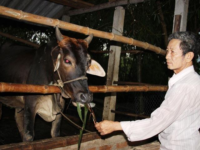 Trang trại chăn nuôi của ông Quang cho doanh thu hơn 1,5 tỷ đồng mỗi năm. Ảnh:D.T