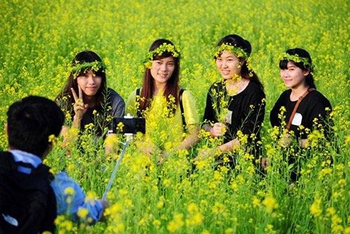 Cánh đồng hoa cải vàng thuộc thôn An Lạc (Gia Lâm, Hà Nội) đang vào thời kỳ nở rộ, thu hút giới trẻ ở Hà thành đến chụp ảnh.