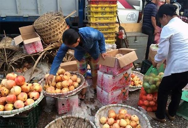 Lựu Trung Quốc về tràn ngập chợ đầu mối