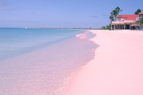 Biển hồng Bermuda:Thuộc quần đảo Bermuda xinh đẹp, vẻ đẹp lãng mạn mà nhẹ nhàng của vịnh biển này đã quyến rũ biết bao du khách mỗi năm. Đến với vịnh Horseshoe, khách du lịch sẽ có cơ hội được ngắm nhìn bãi cát màu hồng nhạt trải dài dọc vịnh, lung linh dưới ánh mặt trời rực rỡ.
