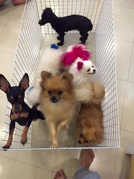 Những chú cún khi còn sống tại quán Tea and Pet (Nhân vật cung cấp)