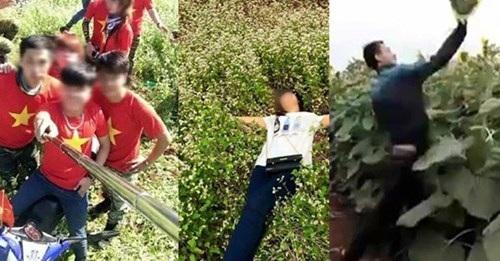 Không ít du khách ở Hà Giang (trái) hay Nghệ An đang tàn phá những cánh đồng hoa