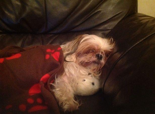 Gặp Hugo, chú chó ngủ 20 tiếng mỗi ngày - 12