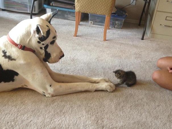 """Ai bảo """"ghét nhau như chó với mèo""""? - 3"""