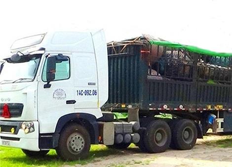 Một xe tải chất đầy cây thốt nốt chuẩn bị khởi hành.