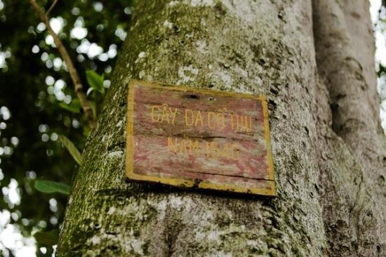 Người dân nơi đây không ai biết chính xác cây đabao nhiêu tuổi, có từ bao giờ. Họ chỉ nhớ từ khi sinh ra đã thấy một cây đacó thân to, bóng lớn. Theo nhiều tài liệu để lạithì cây đa này được trồng từ năm 1540.Đây là câyđa cổ thụduy nhất còn sót lại tronghuyện Bắc Sơn
