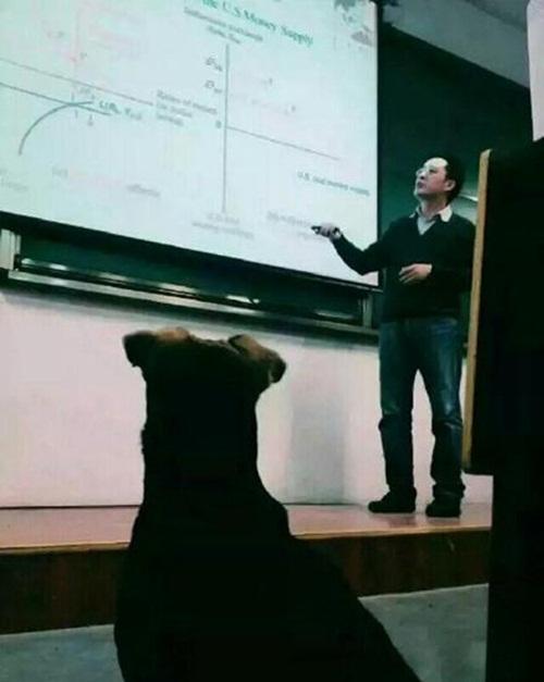 Hình ảnh chú chó chăm học đã truyền cảm hứng cho những sinh viên trong trường. Nhiều người nói rằng, họ cảm thấy hổ thẹn khi không học tập và rèn luyện chăm chỉ bằng chú chó vô danh này.