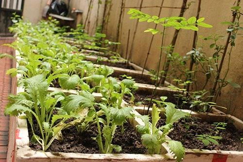 """Lạc vào những """"vườn rau mini"""" của người dân Hà Nội - 3"""