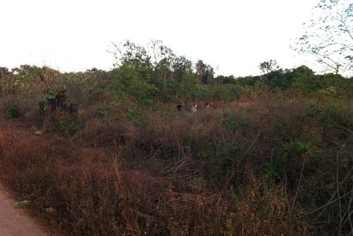 Nghĩa trang chỉ là bãi cỏ um tùm