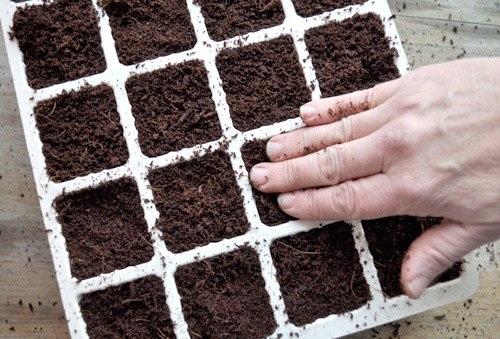 Trồng bắp cải tí hon - thu hoạch sướng tay - 6