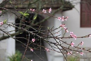 Ngỡ ngàng hoa đào trái vụ đẹp mê hồn ở Tây Bắc - 6