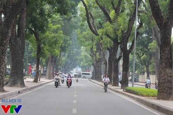 Con đường Hoàng Diệu trở nên thơ mộng hơn bao giờ hết khi Thu về.