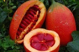 Beta caroten, Lycopen trong Dầu gấc có vai trò miễn dịch, tăng sức đề kháng.