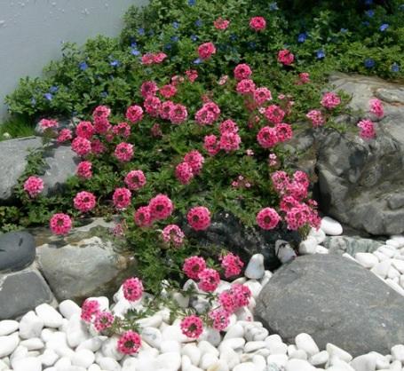 """7 """"bí quyết"""" để thiết kế khu vườn nhỏ tuyệt đẹp - 1"""