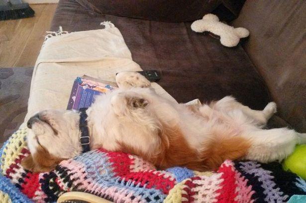 Gặp Hugo, chú chó ngủ 20 tiếng mỗi ngày - 1