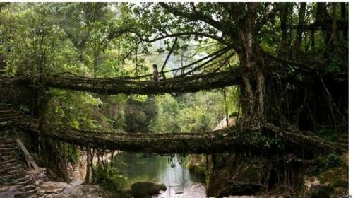 """Ngắm cây cầu như """"tuyệt tác nghệ thuật giữa thiên nhiên"""" - 4"""