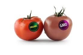 Thực phẩm biến đổi gen: Hiện đại, tất yếu nên chấp nhận? - 2