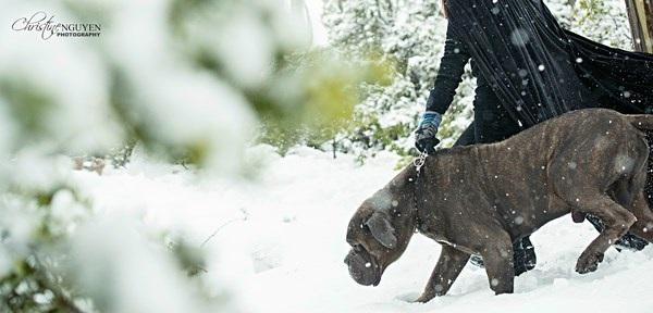"""Cuốn hút bộ ảnh """"ma sói trên núi tuyết"""" của nữ DHS Việt - 4"""