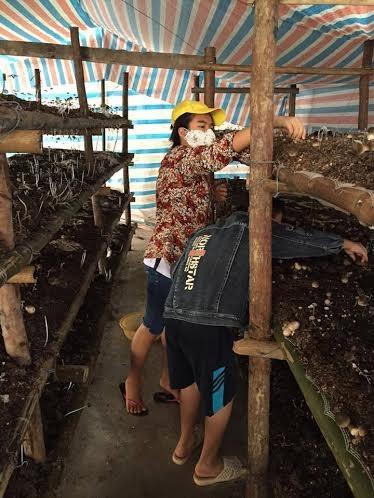 Trừ mùa hè, nấm sò, nấm mỡ có thể trồng quanh năm