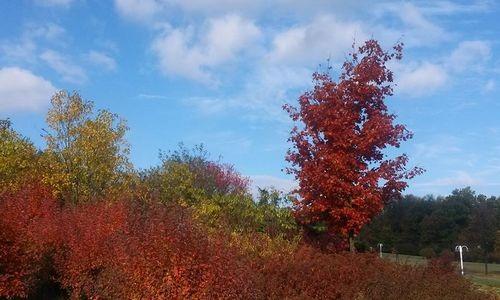 Mùa thu lá đỏ...