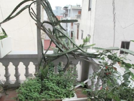 Một góc vườn nhỏ có cả rau và quả