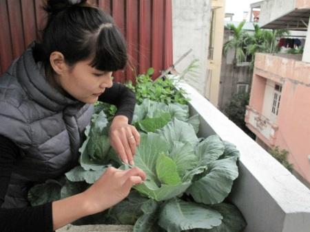 Chị Huyền với những luống rau sạch canh tác ngoài ban công nhà mình