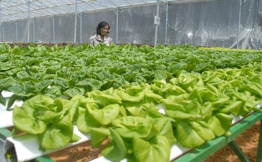 Cận cảnh vườn rau thủy canh bạc tỉ ở Đà Lạt - 5
