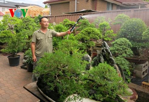 Sau nhiều năm nghiên cứu, theo đuổi đam mê, anh Linh trở thành một Nghệ nhân cây cảnh ở Australia.