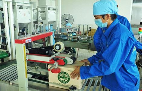 Đóng gói gạo chất lượng cao để xuất khẩu tại một doanh nghiệp. Ảnh: QH