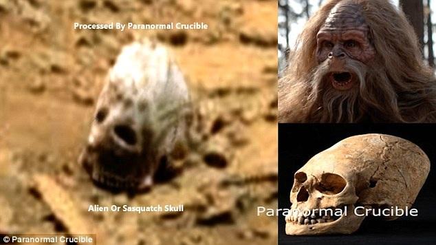 Vật thể giống xương sọ của quái vật Sasquatch trong truyền thuyết.