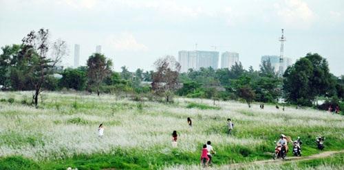 Cánh đồng cỏ lau đẹp đến say đắm lòng người ven đại lộ đẹp nội đô đẹp nhất TP.HCM