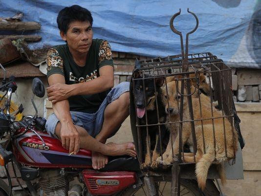 Một người đàn ông ngồi bán chó tại chợ ở tỉnh Quảng Tây, Trung Quốc (Ảnh: EPA)