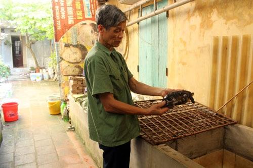 Với ông Bộ, chăm sóc đàn rùa không chỉ đem lại thu nhập cao mà còn là niềm vui tuổi già.  Ảnh: Thu Hà