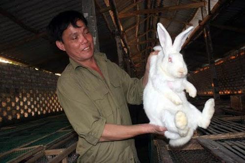 Anh Hoàng Bạch Dương chăm sóc từng con thỏ như người bạn của mình.  Ảnh: Phương Phúc
