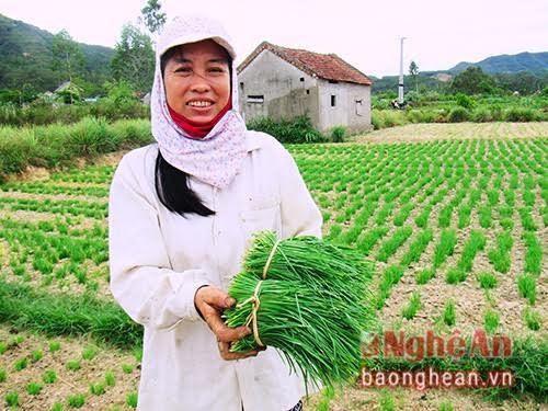 Gia đình chị Phương ở xã Nam Xuân trồng 2 sào hẹ, cho thu nhập hơn 100 triệu đồng/năm.