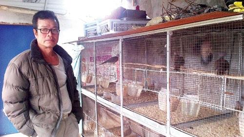 """Ông Trung bên chiếc lồng """"khủng"""" nuôi hơn 200 đôi chim cu bố mẹ. Ảnh: Hồng Châu"""