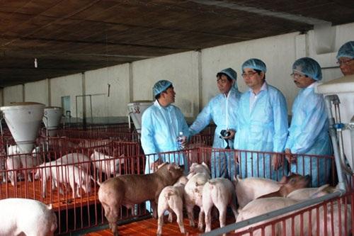 Bộ trưởng Cao Đức Phát (phải) thăm mô hình nuôi heo an toàn ở huyện Thống Nhất, Đồng Nai. Ảnh: Thanh Sa