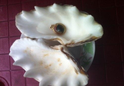 Ốc biển biến hóa thành ngọc trong bụng con trai.
