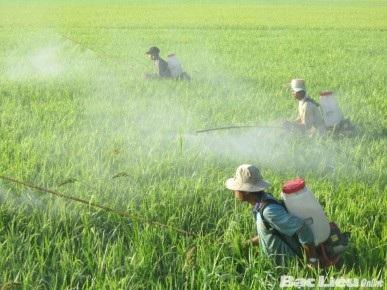 Việc lạm dụng thuốc trừ sâu, hóa chất bảo vệ thực vật và sử dụng không đúng quy trình đang gây ô nhiễm nghiêm trọng không chỉ nông sản mà còn đối với môi trường. Ảnh: PV