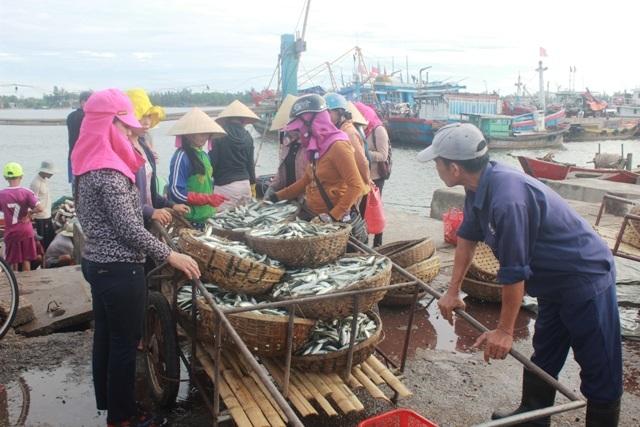 Ngư dân đánh bắt được số ít cá nục nhưng việc tiêu thụ gặp khó khăn