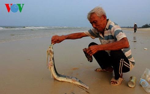 Người dân miền Trung lao đao sau khi cá chết hàng loạt